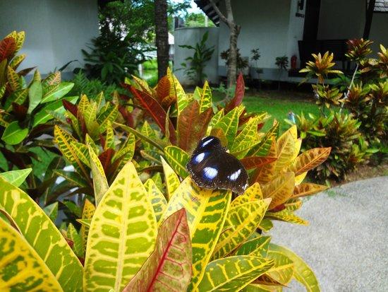 Peace Laguna Resort: regelmässiger Gast vor unserer Haustüre