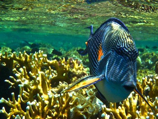 Steigenberger Coraya Beach: Unterwasserwelt