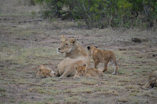 Lower Sabie Restcamp: Nice game-spotting right next to the camp