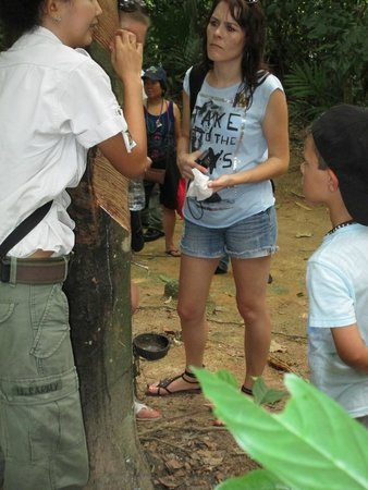 Siam Safari: Tapping rubber tree