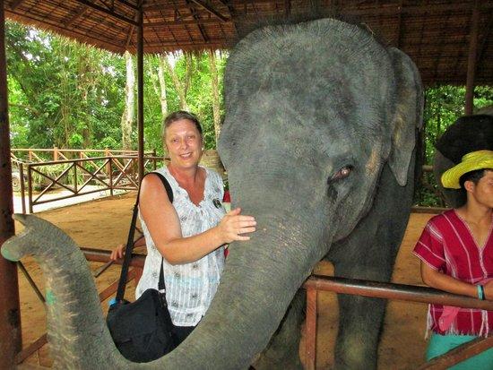 Siam Safari: Give a young one a cuddle