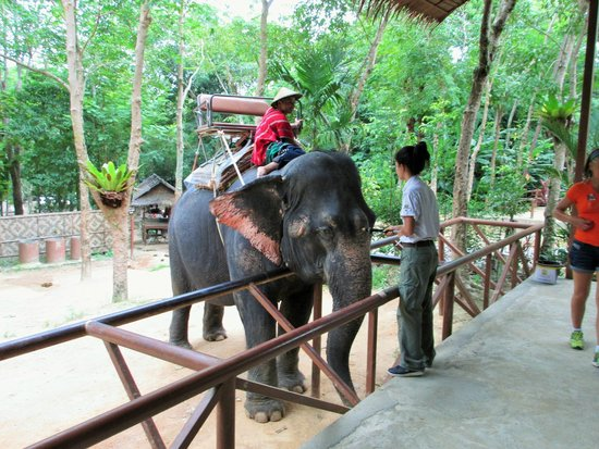 Siam Safari: Getting ready to ride the elephant