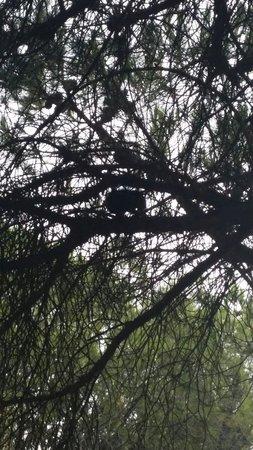 Camping La Baume - Residence La Palmeraie: Écureuil dans les arbres du bonheur ici!!