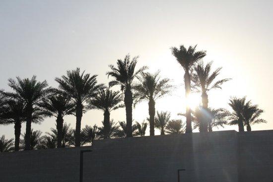 Musée d'art islamique : palm trees