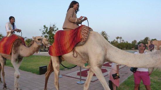 Pullman Marrakech Palmeraie Resort and Spa: Nos hôtesses par très à l'aise sur les chameaux