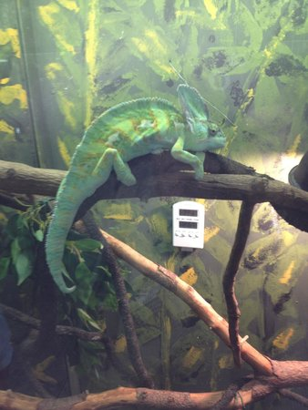 Tropical World: Chamelion