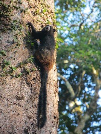 Heath River Wildlife Center: capuchin monkey