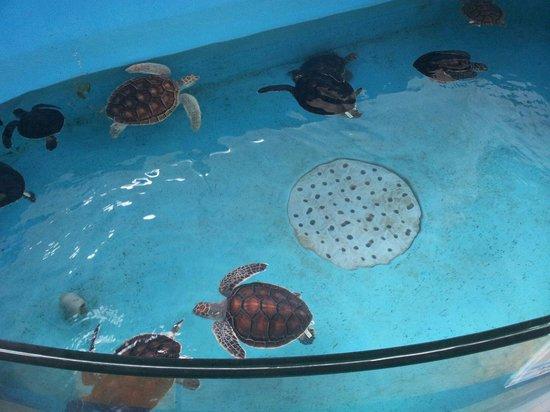 Kushimoto Marine Park Aquarium: Turtles!