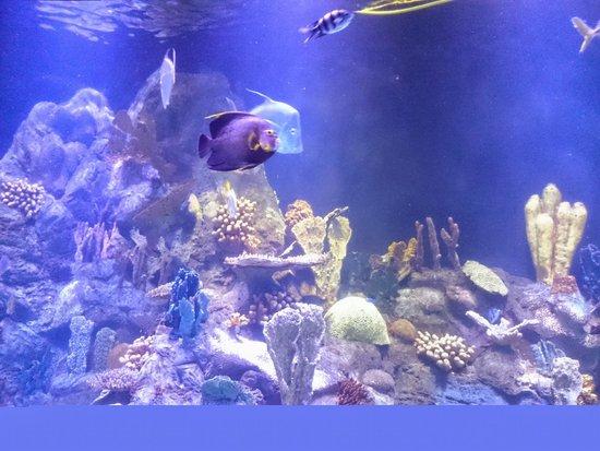 Loro Parque: Aquarium
