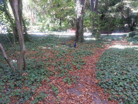 Parque Campo Grande: Tu eliges camino