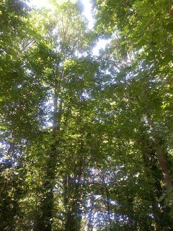 Parque Campo Grande: El cielo entre los árboles
