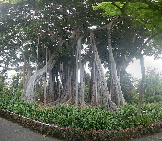 Jardín Botánico: The big tree inside