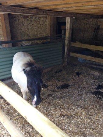 The Garlic Farm: Ponies