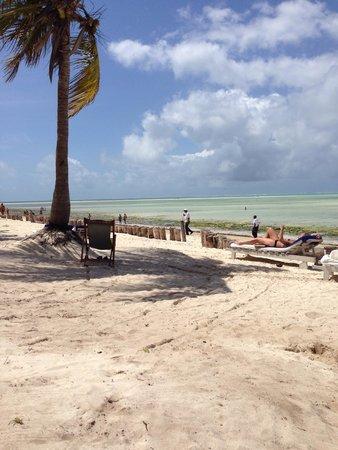 Jacaranda Beach Resort: Ottimo villaggio cordialità assoluta, pulizia ottima, animazione bellissima con il gruppo Going