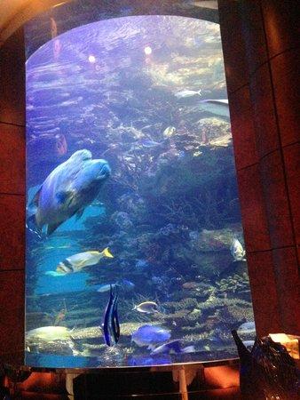 Burj al-Arab : Aquarium inside restaurant