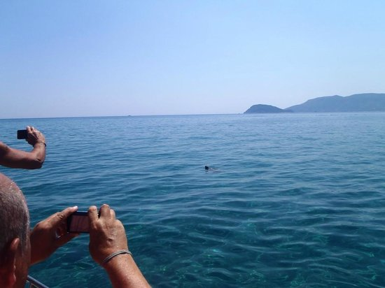 Filoxenia Hotel: Turtle popped head up
