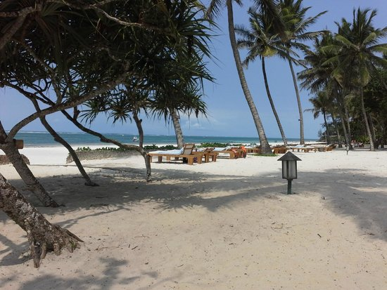 Ocean Village Club: Der Hotelstrand