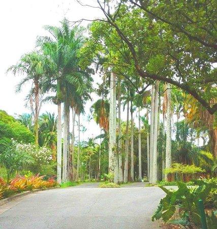 Jardín Botánico: Agradables y seguras caminerías