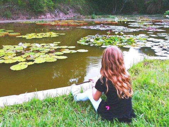 Jardín Botánico: Posee hermosas lagunas aritificiales