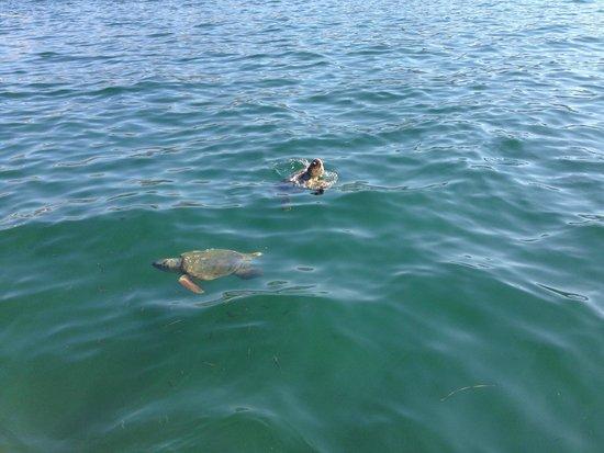 Avithos Resort: Sea Turtles in Argostoli