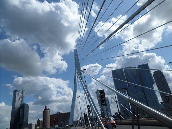 Erasmus Bridge: Il cigno