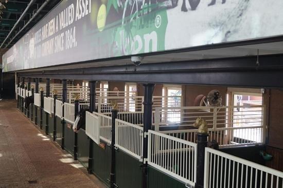 Heineken Experience : horses that deliver the beer