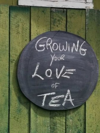 TeaFarm: Sign outside
