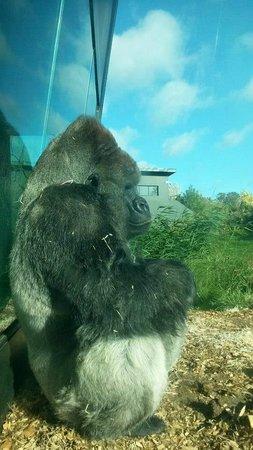 Dublin Zoo: Harry !