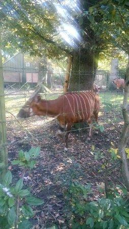 Dublin Zoo: J'ai oublié le nom..