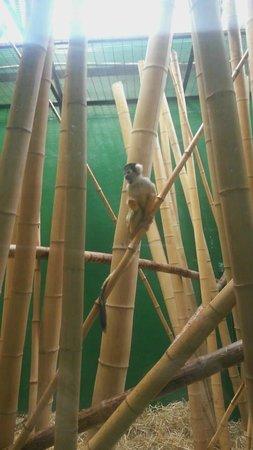 Dublin Zoo: Saimiris