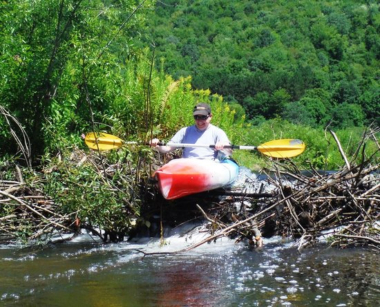 Appalachian Trail Adventures: Over the beaver dam!