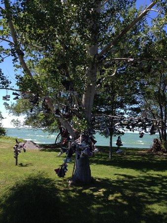 Explore Pelee: Shoe Tree on North West Corner