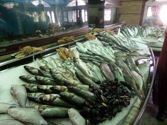 Balbaa Village: Stand with fish!
