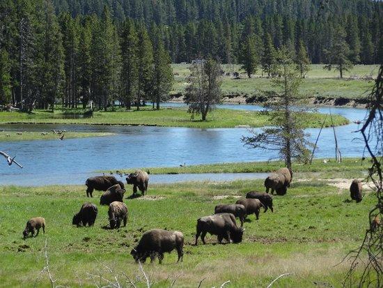 أولد فايثفول سنو لودج آند كابينز: Yellowstone Park