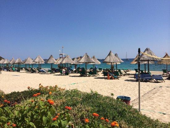 Hotel Cormoran : Vista della spiaggia dal bar