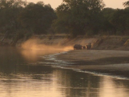 Thornicroft Lodge : Elephants crossing the river near the Camp