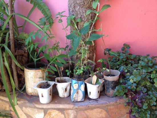 Casa OsmaryAlberto: stekjes in de tuin