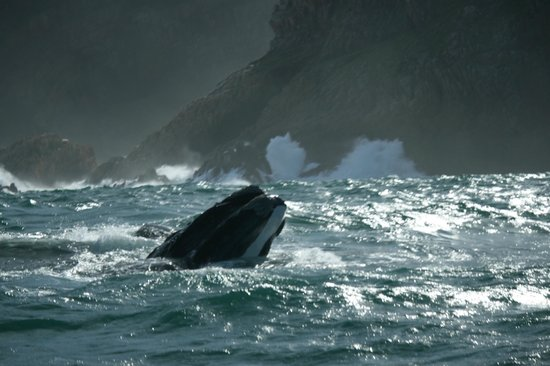 The Lofts Boutique Hotel : Southern Right Whale, Knysna Heads