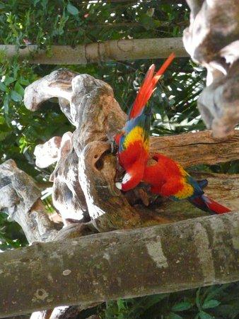 Xcaret Eco Theme Park: Wildlife at XCaret