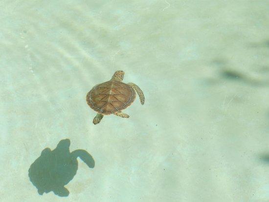 Xcaret Eco Theme Park: Turtles @ XCaret