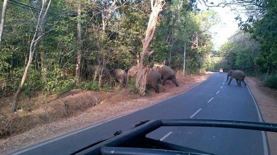 Sigiriya World Heritage Site: Gracious !!