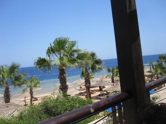 Savoy Sharm El Sheikh: from seafood island