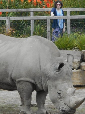 Dublin Zoo: There's Mr. Rhino  (and Jane in the background)