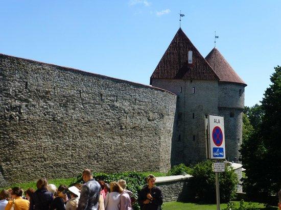 Ayuntamiento: Tallin Old Town Walls (1)