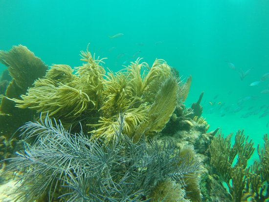 Starfish Snorkeling: some of the reefs you'll see. All are teeming with various fish and life.
