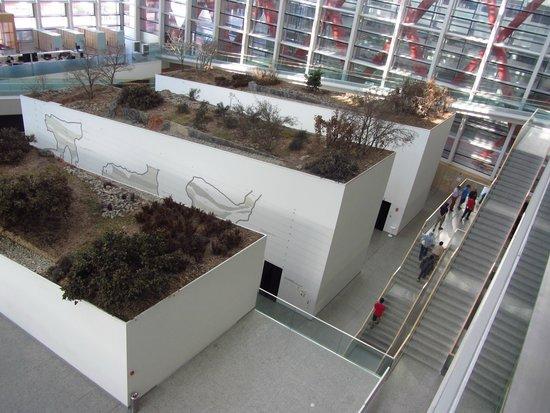 Museo de la Evolución Humana: Museo de la Evolucion Humana