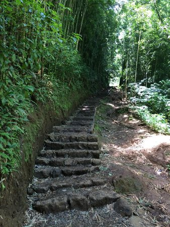 Manoa Falls : The steps leading to the falls