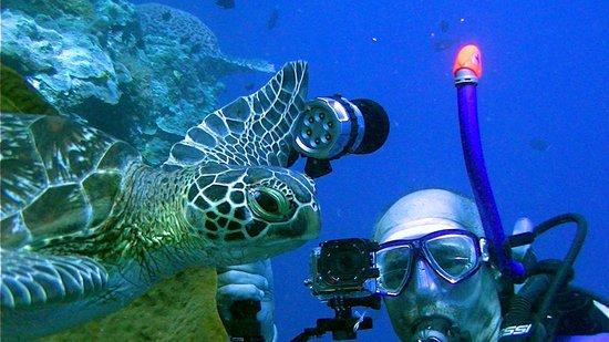 Murex Dive Resort: Duikstek Lekuan 1 Bunaken