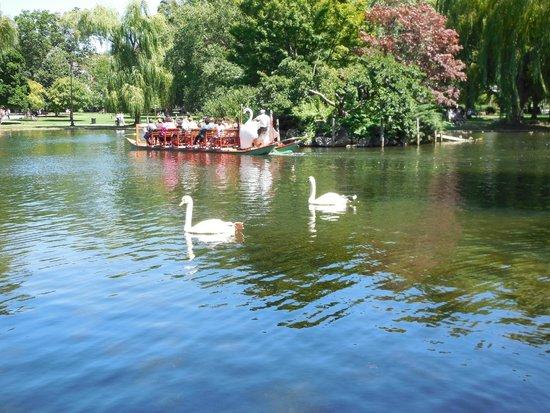 Swan Boats : Romeo & Juliet