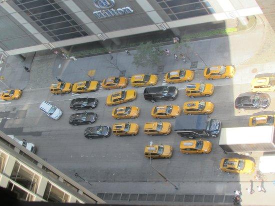 Warwick New York: marching yellow ants